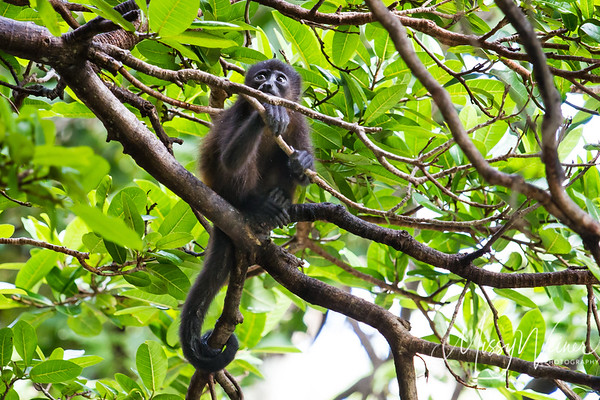 Birds and other wildlife of Costa Rica