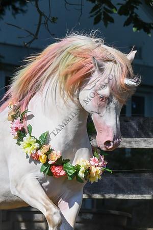Smokey the Unicorn 071820