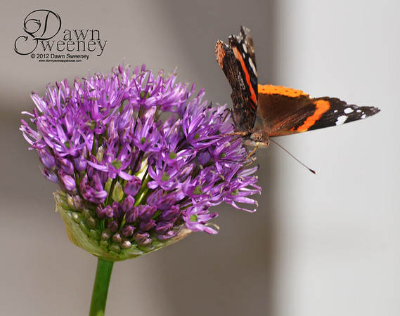may 2012 butterfly