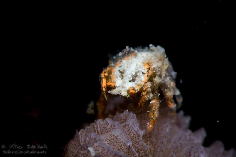 fuzzy crab (1 of 1).jpg