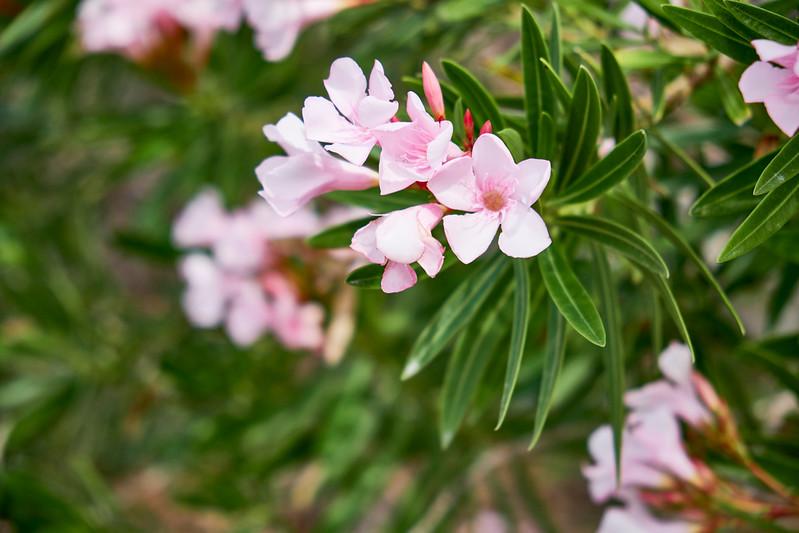 Useppa-Botanical-Walk-023.jpg