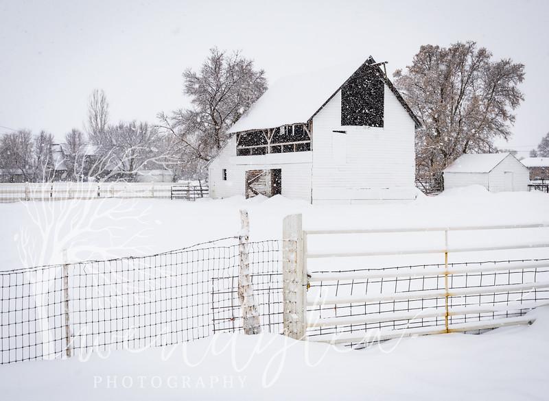 wlc winter barns22January 30, 2016.jpg