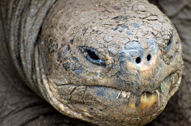 Galapagos-55.jpg