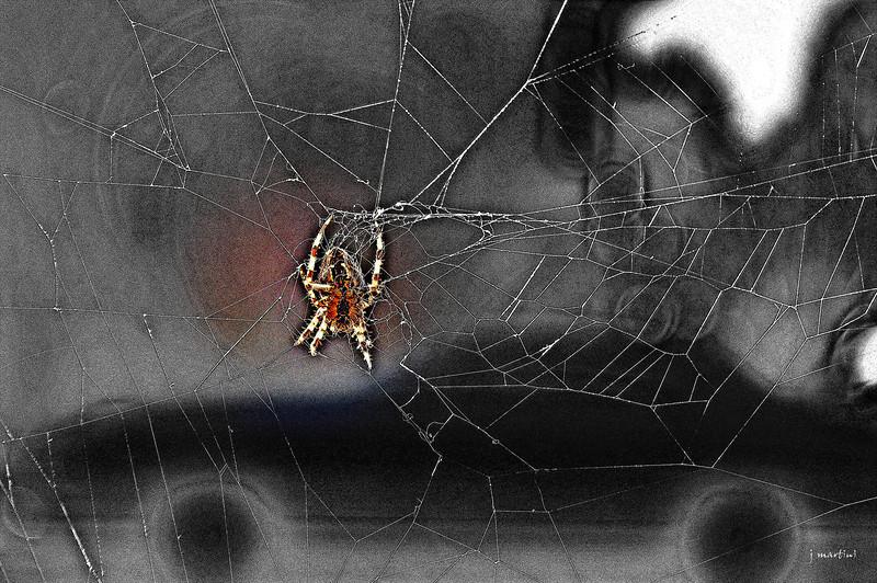 urban spider 11-1-2011.jpg