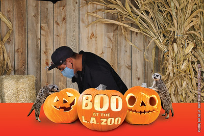 2021 Zoo Events