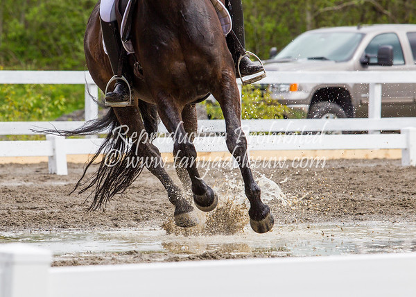 Equestrian - SVEA Dressage - Squamish, April 2017