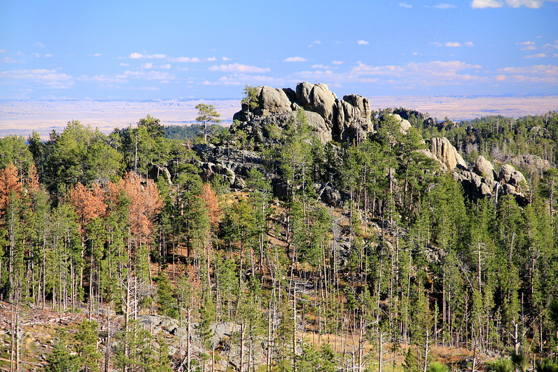 Needles Highway 7.jpg