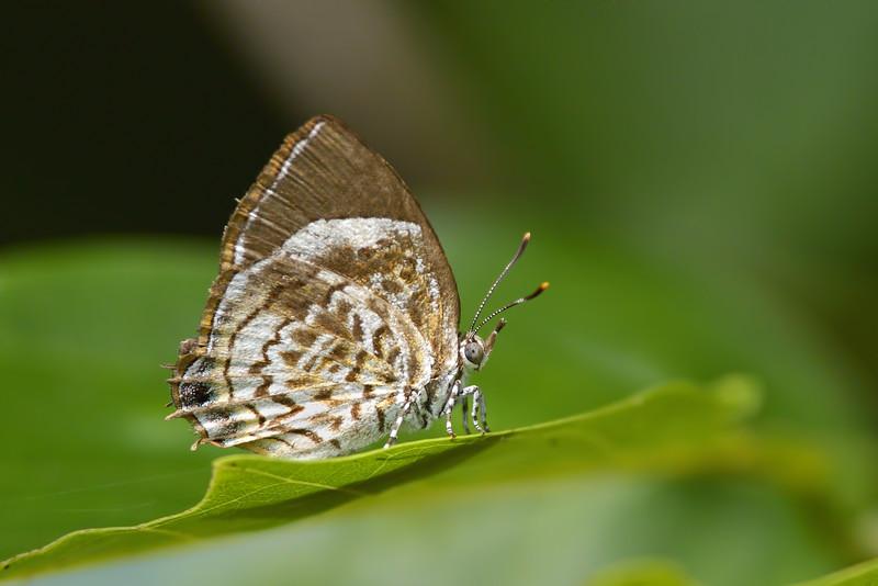 A-Butterfly.jpg