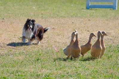 Course B Ducks
