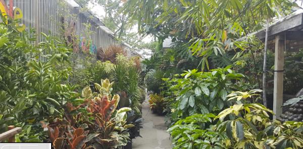 Nurseries (Plants)