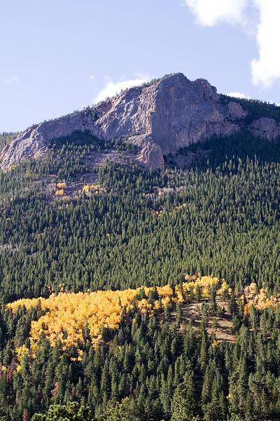 Aspen Grove on the Mountain 3.jpg