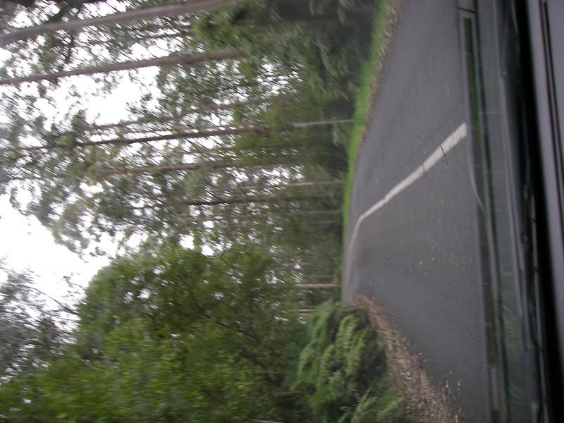 Great Ocean Road 146.JPG