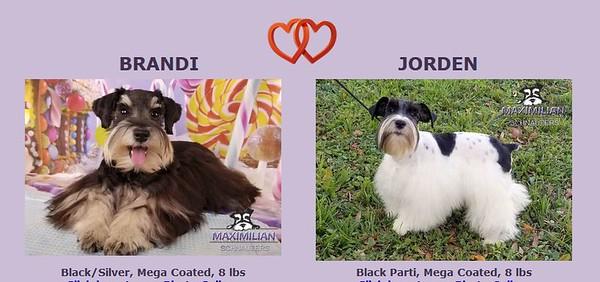 Brandi & Jordan Puppies, DOB 07/01/2020