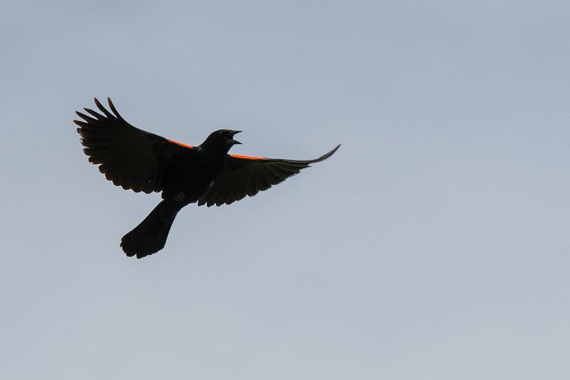 2019.06.07-Birds-07.jpg