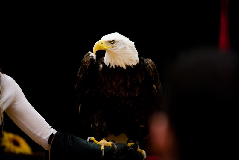 martin eagle-23.jpg