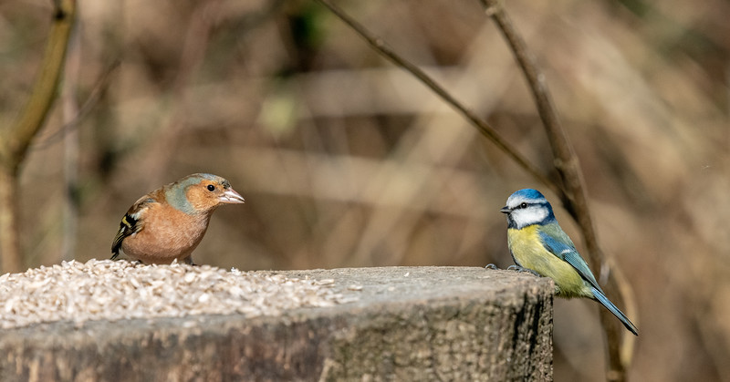 Finch and Tit-58.jpg