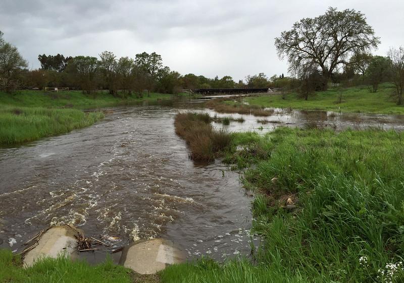 creek rise.jpg