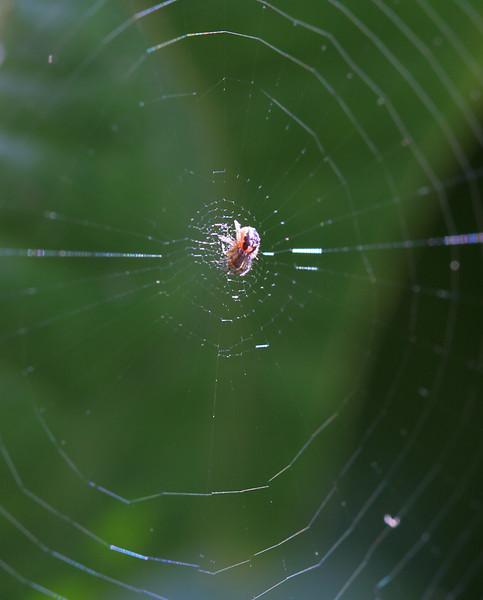 6450 Small Spider.jpg