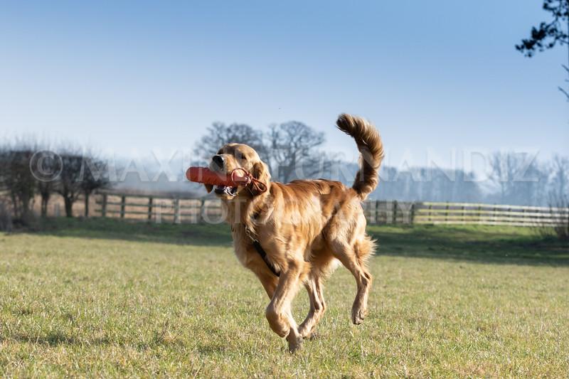 Dog Training Novice GD Feb2019-5894.jpg