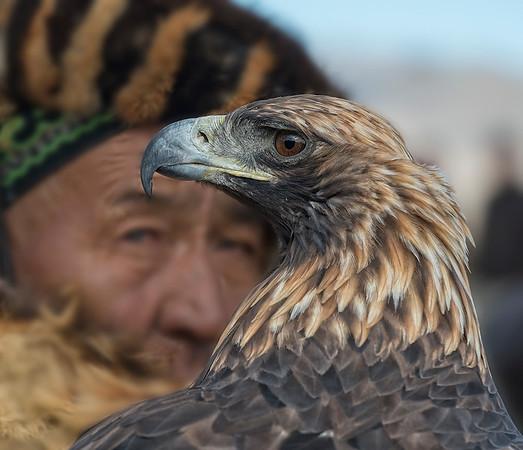 Golden Eagle Festival, Mongolia