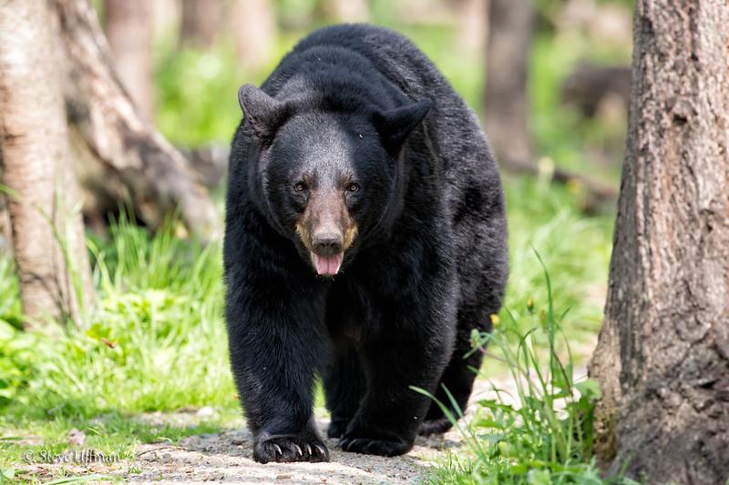 20120519-_Q2C6428Black-Bears-Edit-3.jpg