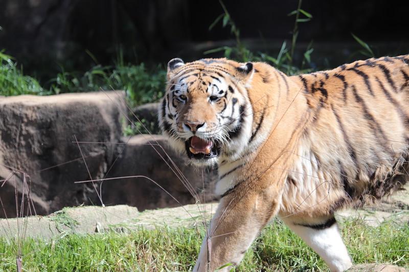Riverbanks Zoo 2018