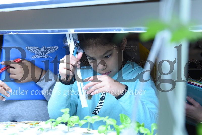 Butler Middle School fifth grader Stephany Cantera lifts a plant sample to measure the roots in the lab at the school's Fisheries Program Nursery. Seb Foltz/Butler Eagle