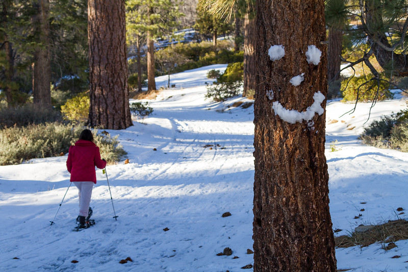 Skier on ski track with smiley face on tree trunk in foreground - USA - California - Lake Arrowhead