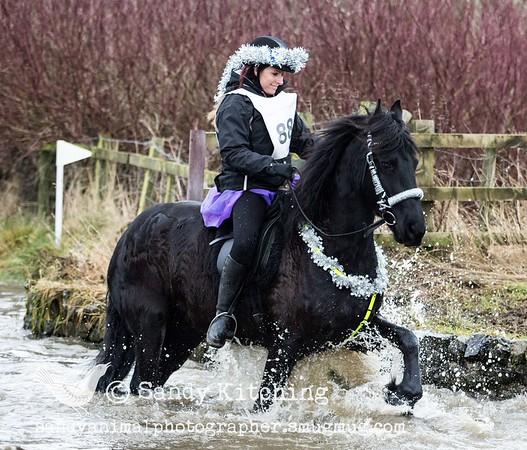 Christmas Black Horses 2013