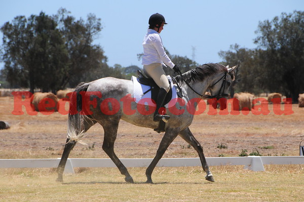 2017 01 22 Oakford Dressage and ShowJumping Day Dressage