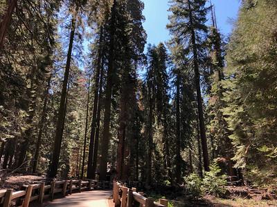 Sequoia 2018