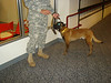 Combat & Support Canines : 1 gallery with 186 photos