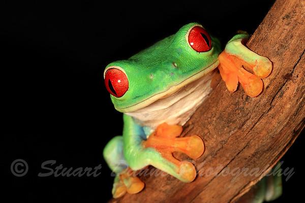 REPTILES & AMPHIBIANS (Frogs, Lizards,& Salamanders)