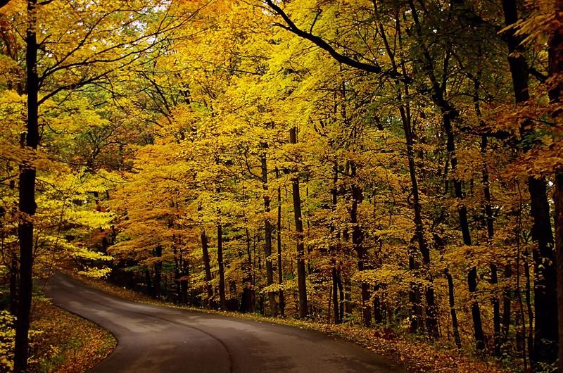 Fire road.jpg