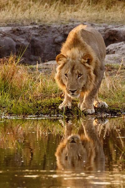 Botswana 2016-00240.jpg