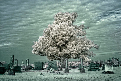 Smithville Ms in IR