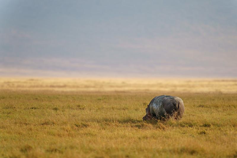 NgorongoroCrater-20181004-1213.jpg
