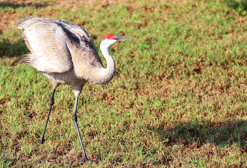 cranes-3-4-19_4825.jpg