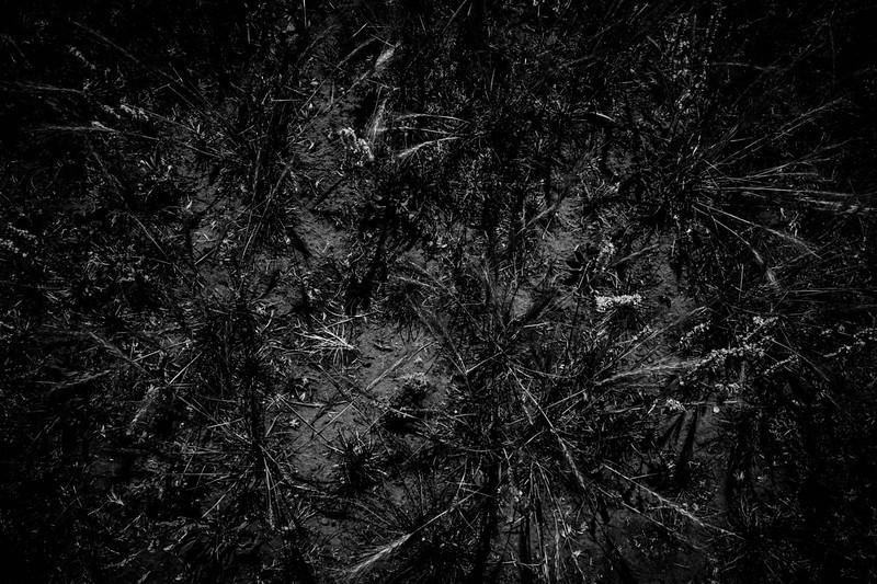 amole canyon-9186.jpg