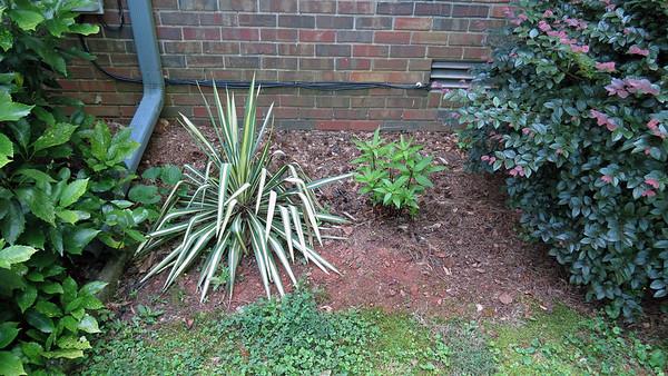June 5:  The Gardenia looks great .  .  .