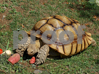 runaway-tortoise-captured-in-dallas-returned-to-owner