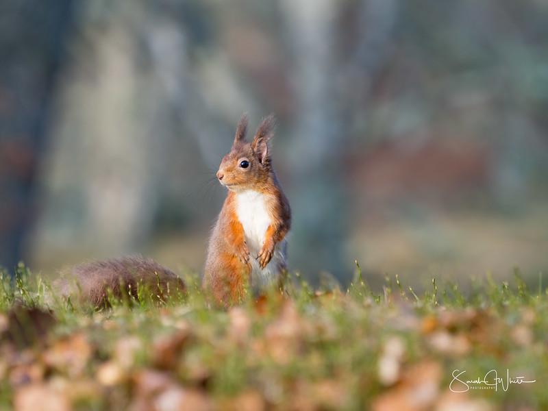 RedSquirrelBootCamp_130217_737.jpg