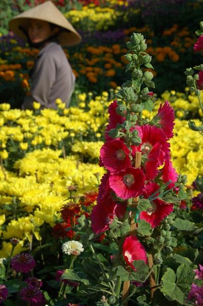 Flowers in My Tho - Mekong Delta, Vietnam