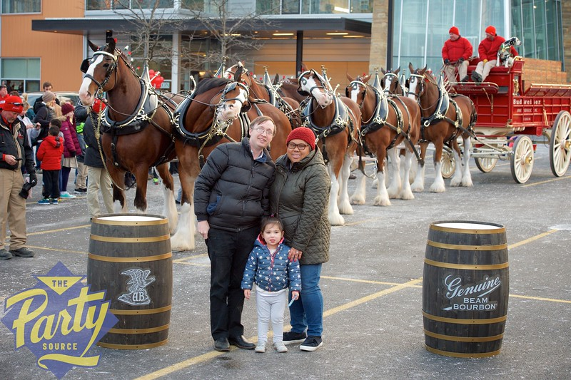 Clydesdale Portraits 342.jpg