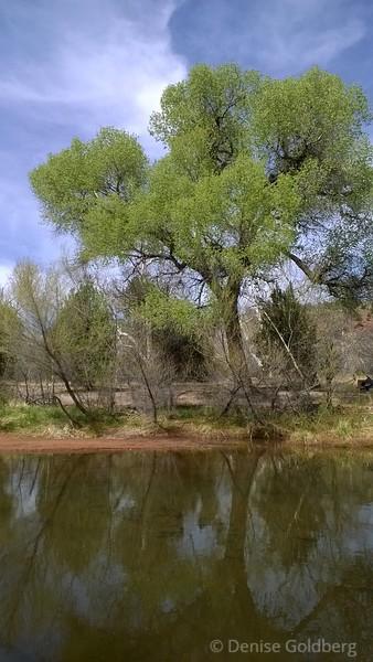 green! on Oak Creek
