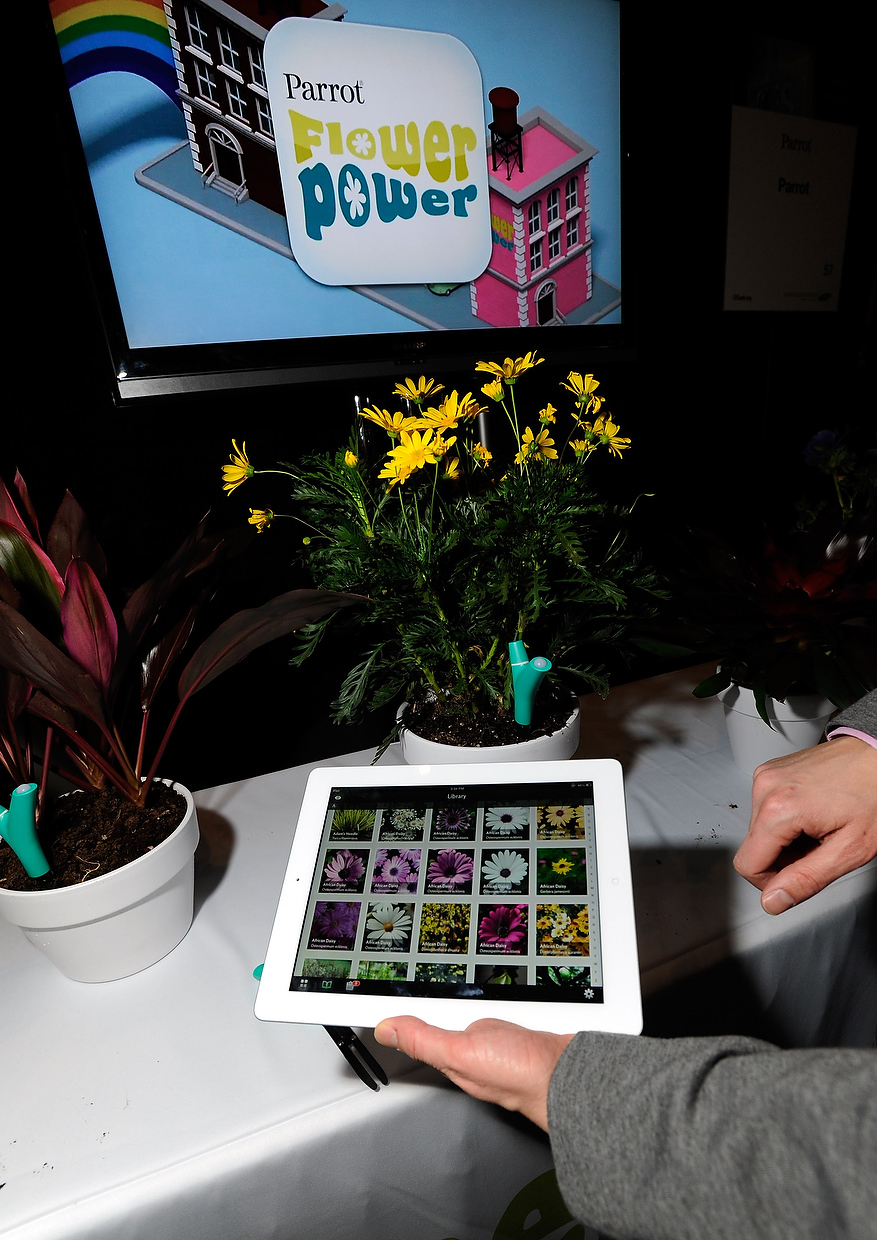 . Parrot\'s Flower Power plant monitor and application is on display during a press event at the Mandalay Bay Convention Center for the 2013 International CES on January 6, 2013 in Las Vegas, Nevada. The monitor will sense the plant\'s environment and relay the information to the user\'s smart phone or tablet. (Photo by David Becker/Getty Images)
