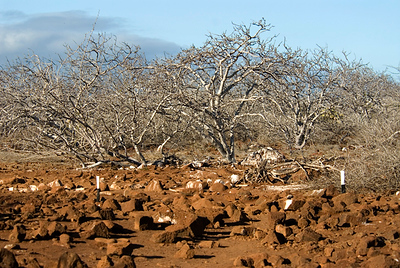 Galapagos' Landscapes