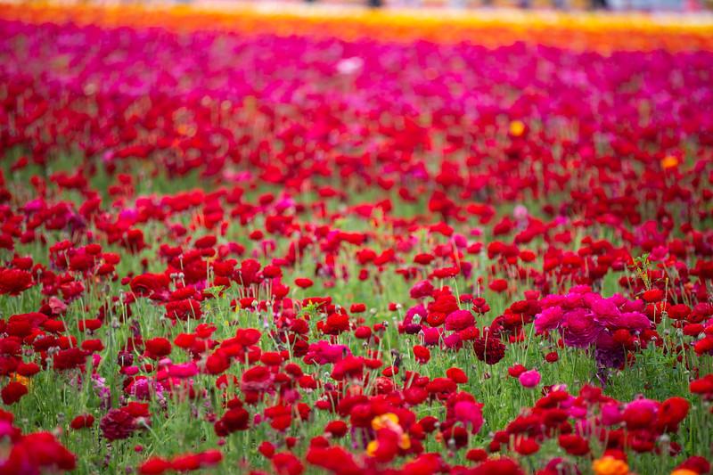 Spring Flowers B-387.jpg