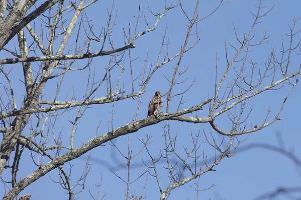 2017-03-11 Birthday hike Hawk at the Tourne