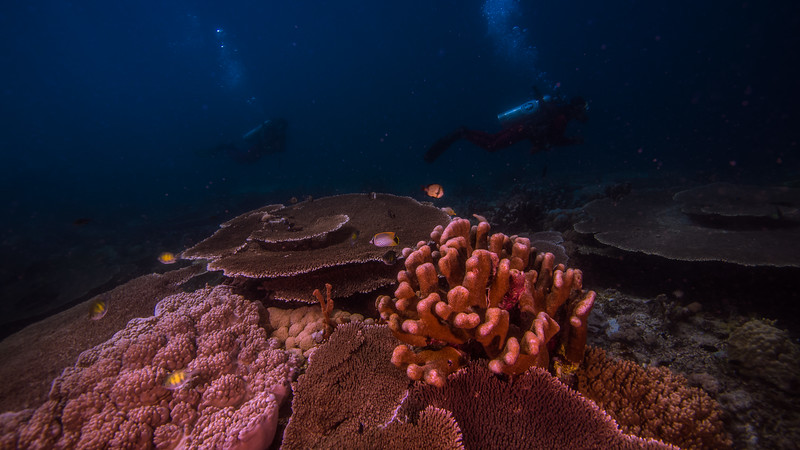 Taken at Lemo-Lemo divesite in Ternate Island, North Maluku, Indonesia during our 8D7N excursion in March 2018